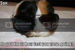 FunnyGuineaPig2_zps73a573d5.jpg